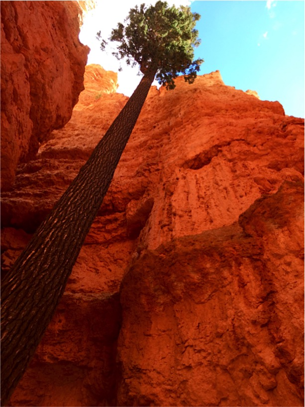 Bryce Canyon Travel Tips at TheFrugalGirls.com