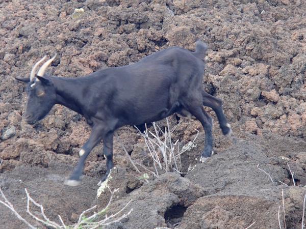Maui Lava Fields and Travel Tips | TheFrugalGirls.com