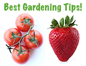 Best Ever Gardening Tips from TheFrugalGirls.com