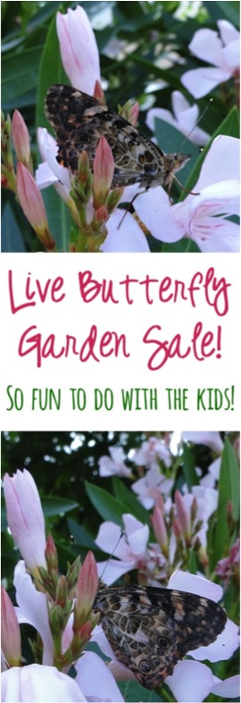 Live Butterfly Gardens - So Fun to do with the Kids | TheFrugalGirls.com