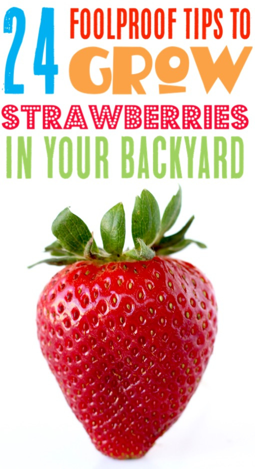 Strawberry Garden Ideas DIY Tips for How to Grow Strawberries in Raised Beds or a Vertical Planter