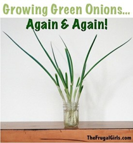 Growing Your Green Onion Again and Again