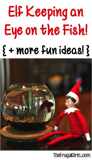 Elf Keeping an Eye on the Fish and more fun Elf on the Shelf Ideas at TheFrugalGirls.com