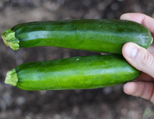 Zucchini Growing Tips