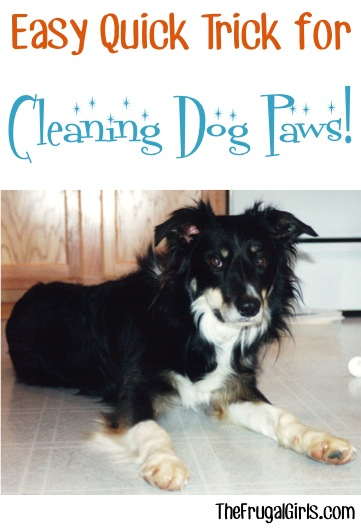 Cleaning Dog Paws at TheFrugalGIrls.com