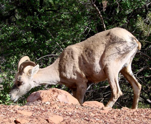 Zion National Park Wildlife | TheFrugalGirls.com