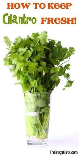 How to Keep Cilantro Fresh