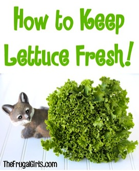How to Keep Lettuce Fresh
