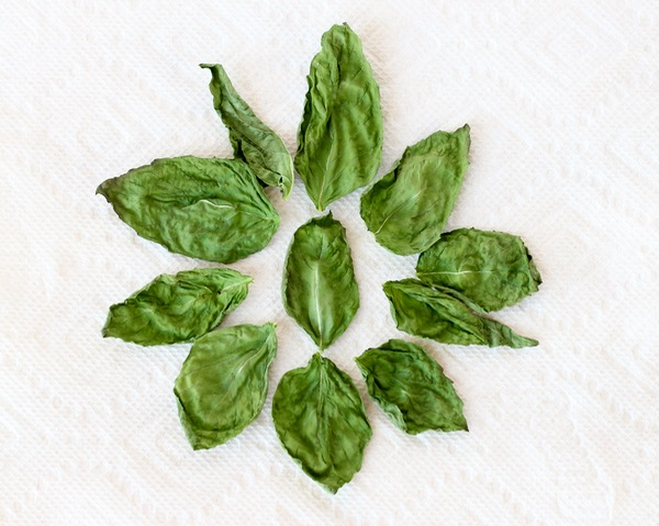 Dry Fresh Basil Tutorial at TheFrugalGirls.com