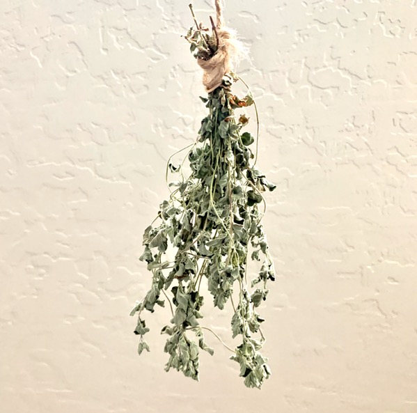 How to Air Dry Oregano Leaves at Home
