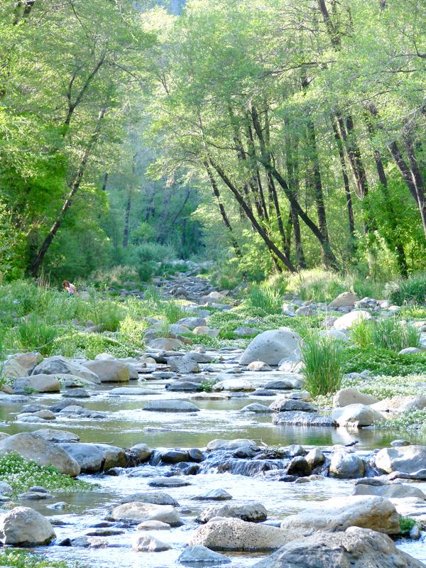 Manzanita Campground Sedona AZ