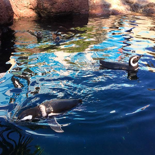 SeaWorld Attractions Penguin Encounter