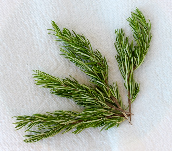 How to Dry Fresh Rosemary from TheFrugalGirls.com