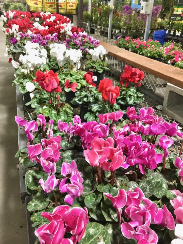 Our Best Secrets To Saving BIG at Lowe's!