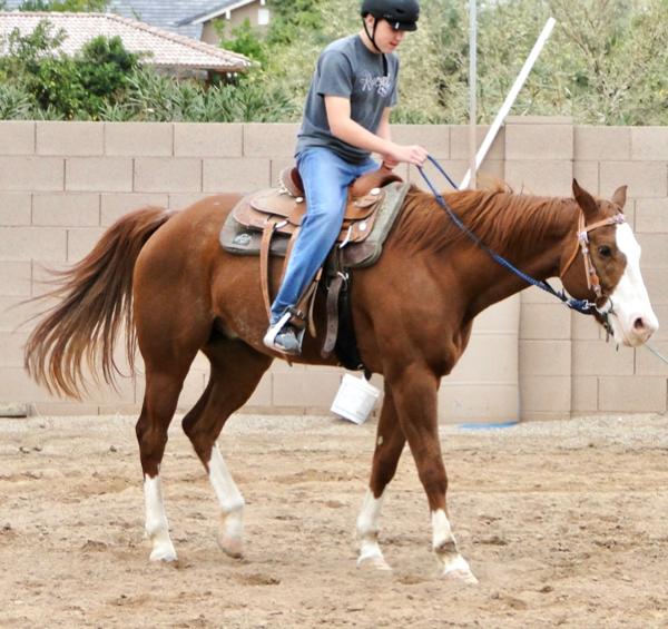 Horse Tail Coconut Oil Conditioner Trick