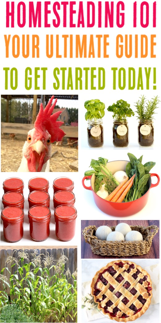 Homesteading for Beginners Step by Step Ideas, Gardening Tips, Animal Care Tricks, and Heritage Recipes to Get Started on your Modern Day Homestead Today