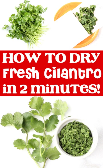 How to Dry Cilantro - Drying Herbs Trick