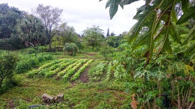 rain gardens