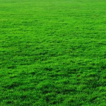 Grade A grass