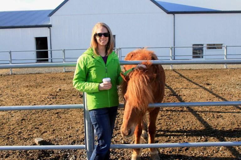 Icelandic_Horse1