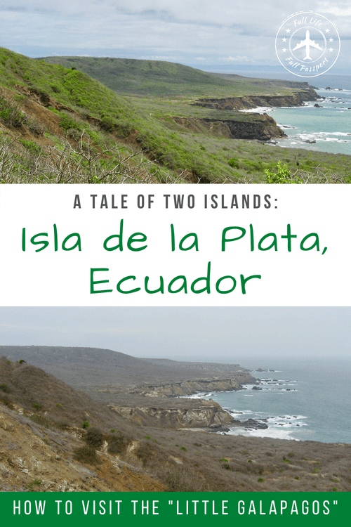 If you're on a budget, Isla de la Plata is a great alternative to the Galapagos. Take a tour from Puerto Lopez to see birds, whales, and more!