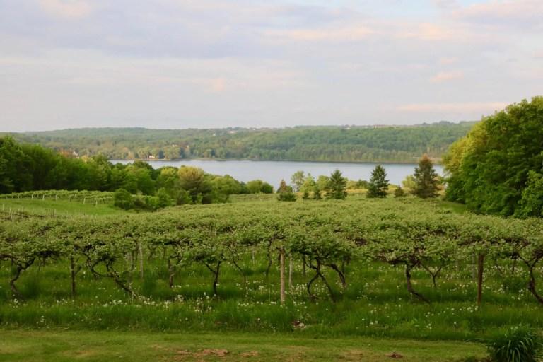 vineyards and lake