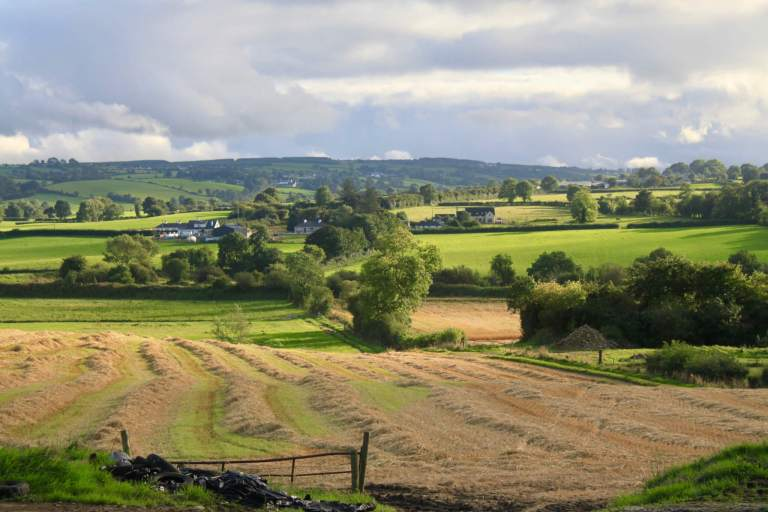 The green Irish countryside, courtesy of my mother-in-law's desire to stop for photos!