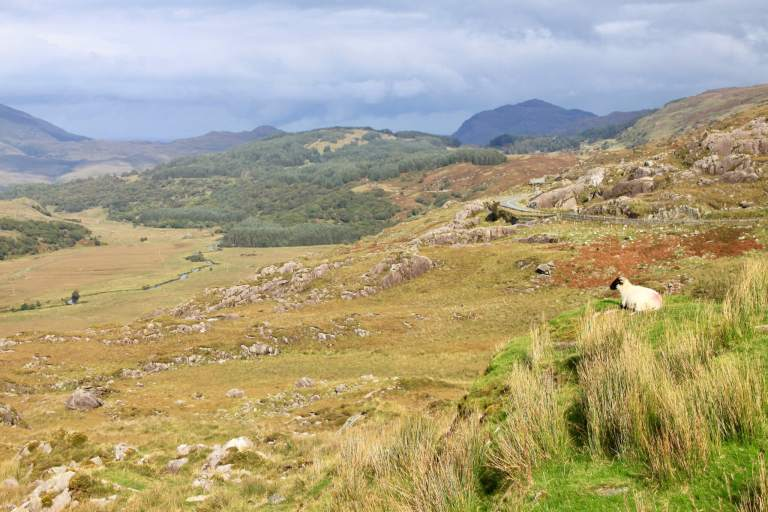 Sheep laying on a ridge in a wide rocky valley