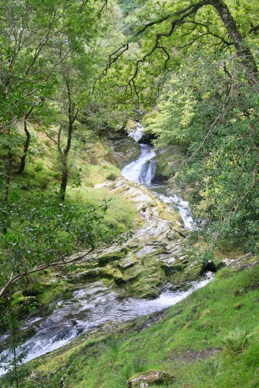 Small waterfall in a green forest