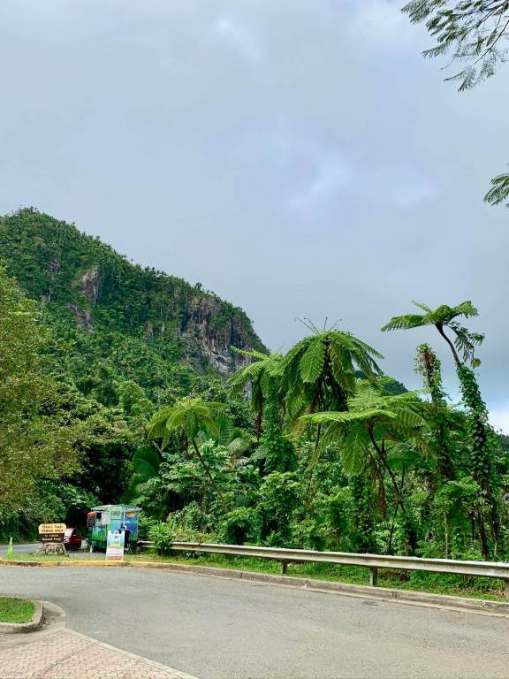 Lush vegetation and mountain in El Yunque