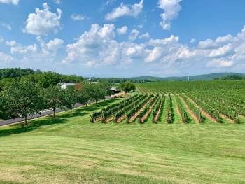 The vineyards at Barboursville, our second winery during our Virginia wine country bachelorette weekend