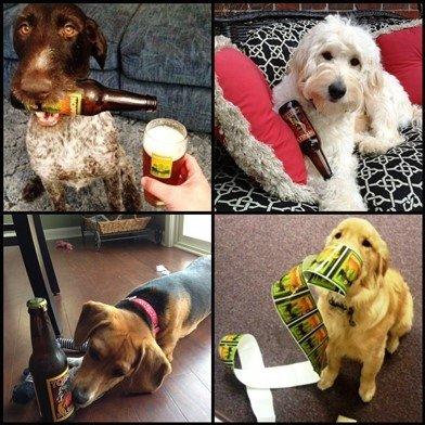 Foothills Dog Label Contest