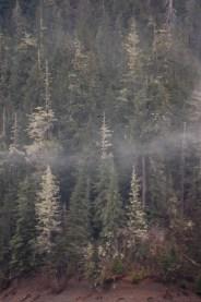 Fog Forest 4