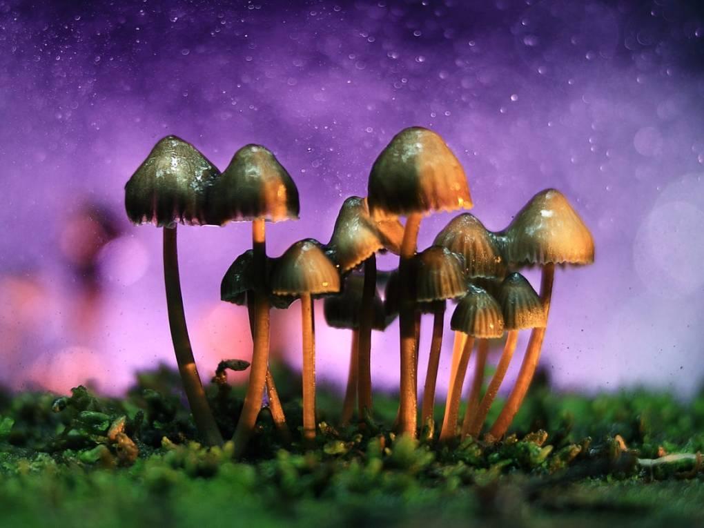 Are Magic Mushrooms Legal in Canada? 1