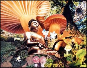 The Benefits of Magic Mushrooms 4