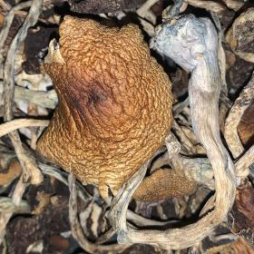 Cambodian – Dried Mushroom – $120 Deal