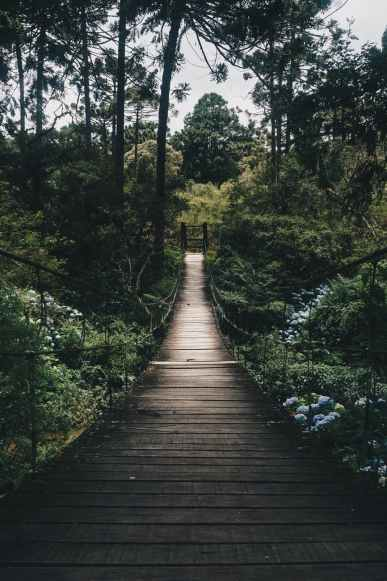 black hanging bridge surrounded by green forest trees
