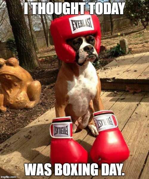 Boxing Day Meme : boxing, Boxing, Memes, Won't