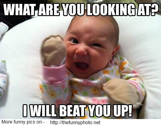 jokes funny pictures and