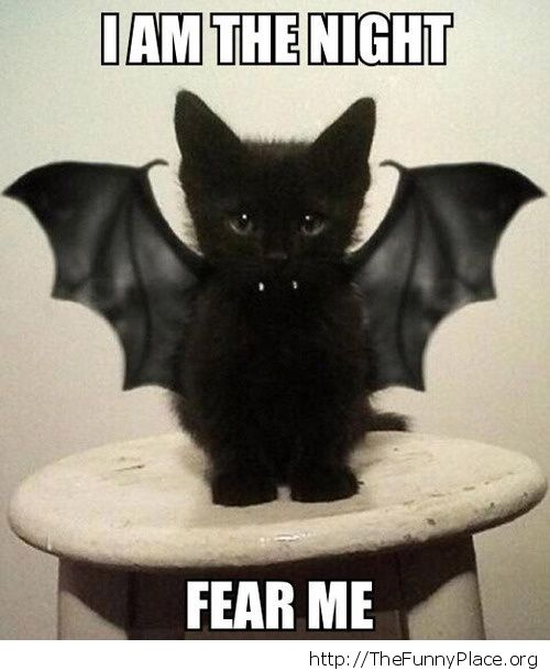 Funny Halloween Quotes And Sayings Wallpapers Animals Thefunnyplace