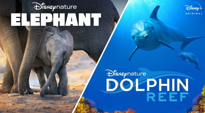 Disneynature's Elephant & Dolphin Reef | Official Trailer