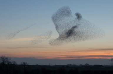 The Murmuration Model – Building an Intrapreneurial Culture