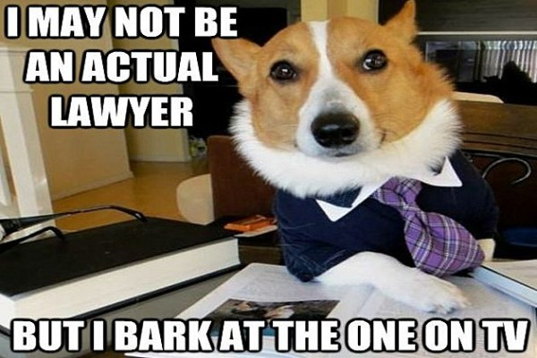 Lawyer Dog Meme Has a Nose for Justice