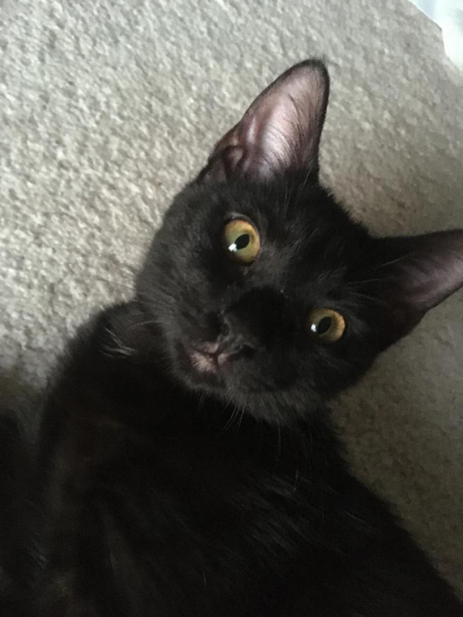 black cat with big eyes