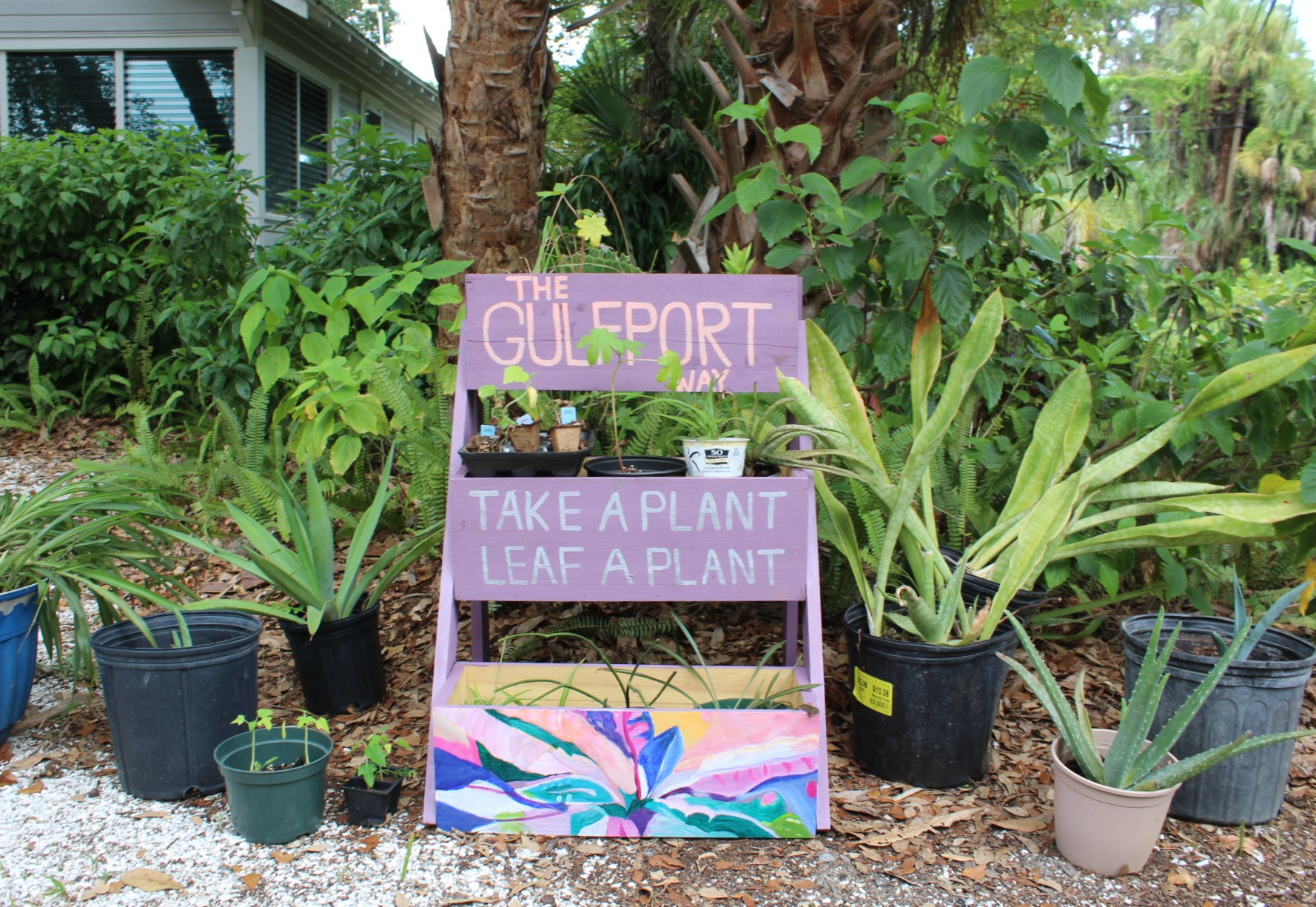 Purple plant swap stand in Gulfport Florida