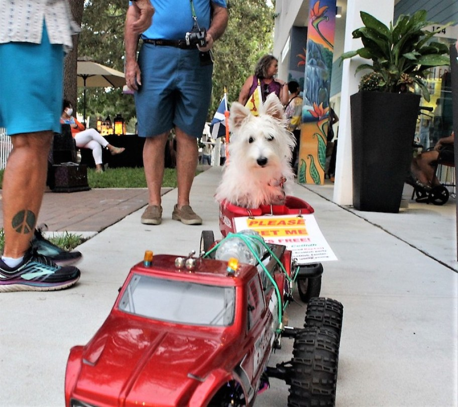 A white dog rides in a red toy car wearing a gold crown.