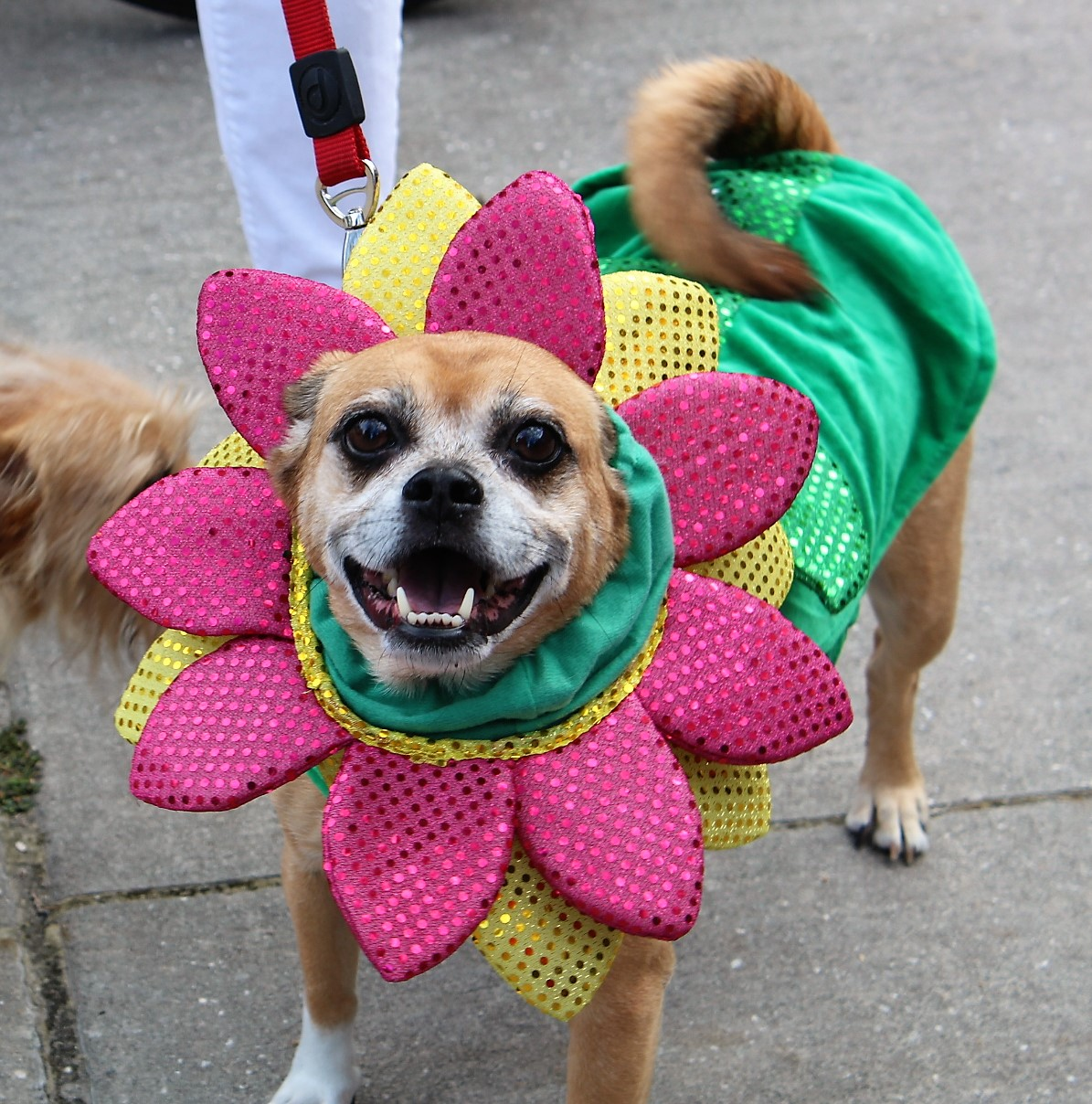 A dog in a flower costume in pink yellow and green