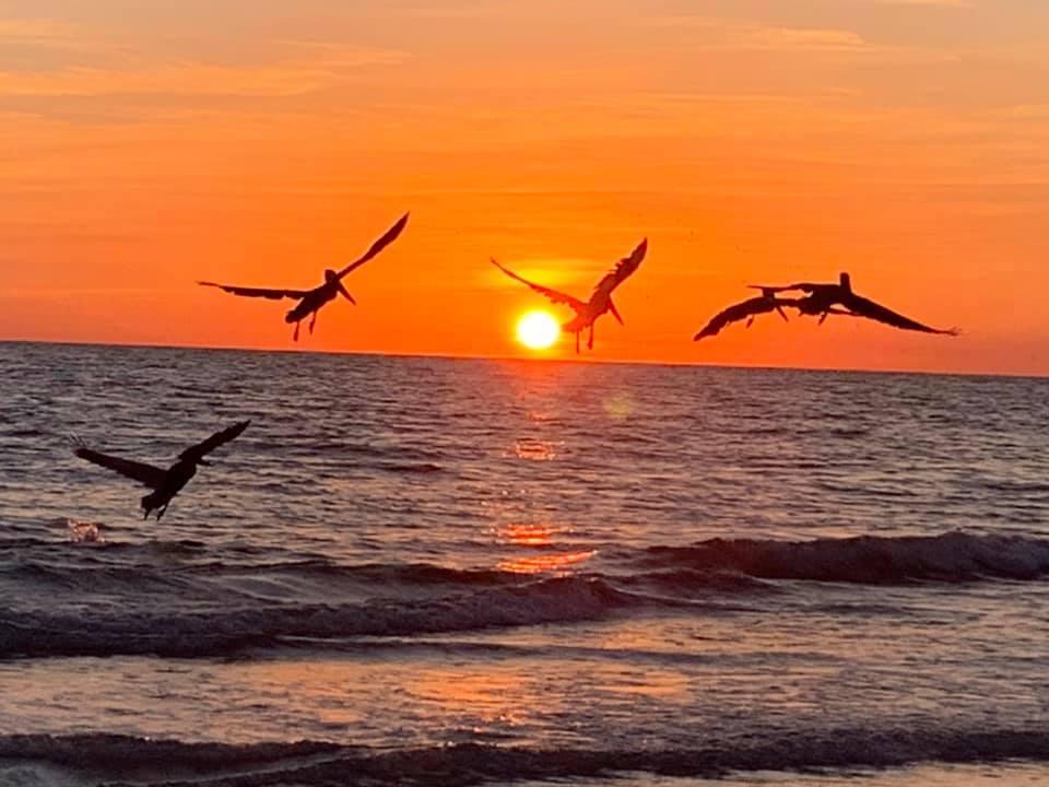 A Treasure Island sunset with cascading seagulls.