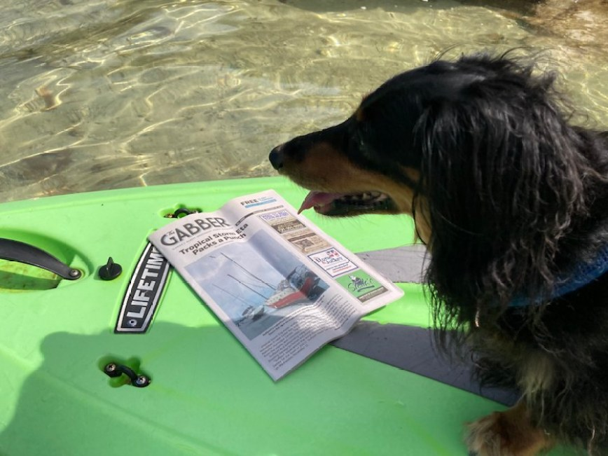 A dog on a paddle board in the water with a copy of the Gabber Newspaper.