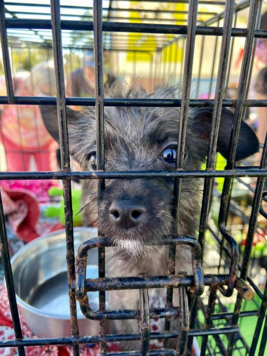 A puppy in a cage looking at the camera
